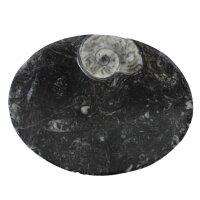 Ammoniten – Fossilien Schale, oval