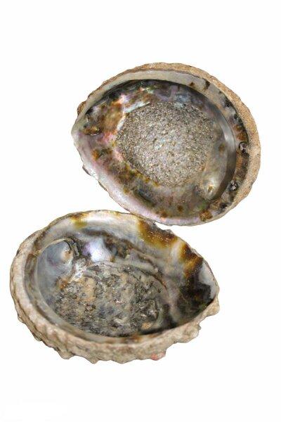 Abalone Paua Muschel, 1 Seite pol., 1 Seite natur