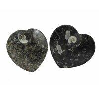 Ammoniten Fossilien Schale Herz