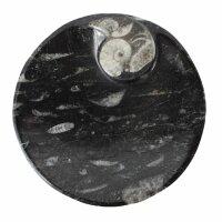 Ammoniten – Fossilien Schale, rund
